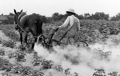 Plantación algodonera en Alabama